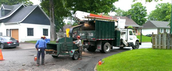 Déchiquetage et déboisement de terrain | Turcotte service d'arbres