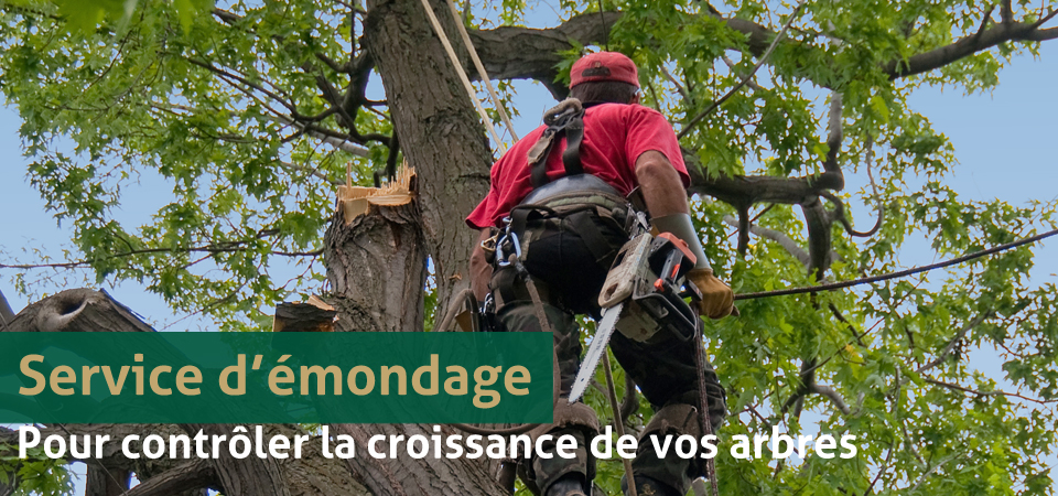 emondage communication