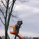 Arboriculteur élagueur | Turcotte Service d'arbre
