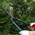 Tailleur de haie de cèdre Québec | Turcotte service d'arbres