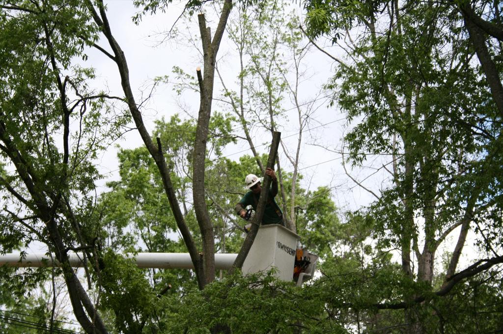 emondage d'abres | Turcotte Service d'arbres